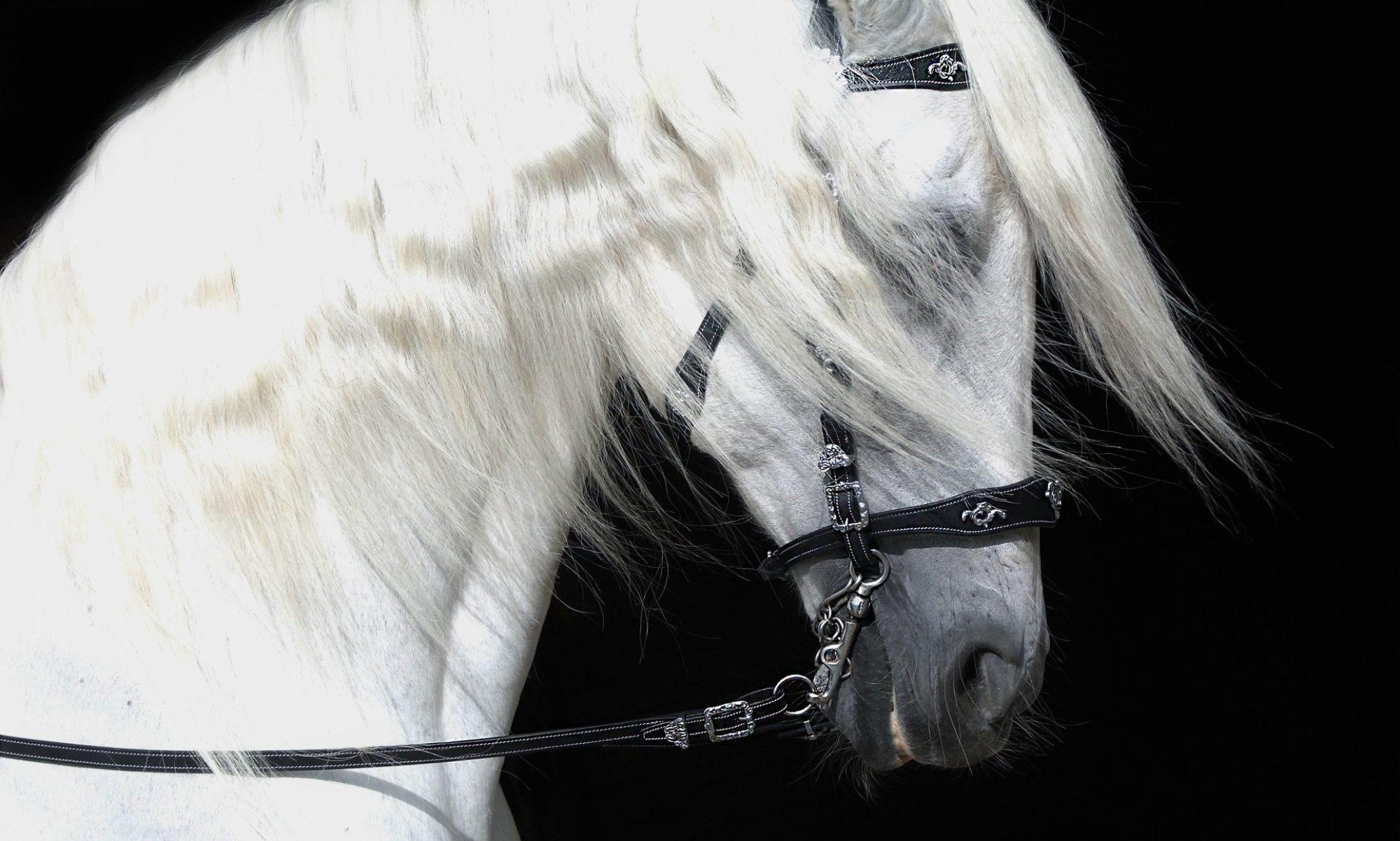 MEDIA HORSES INTERNATIONAL